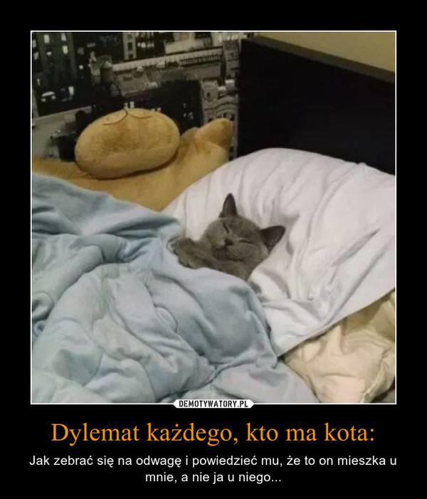 Dylemat każdego, kto ma kota: – Jak zebrać się na odwagę i powiedzieć mu, że to on mieszka u mnie, a nie ja u niego...