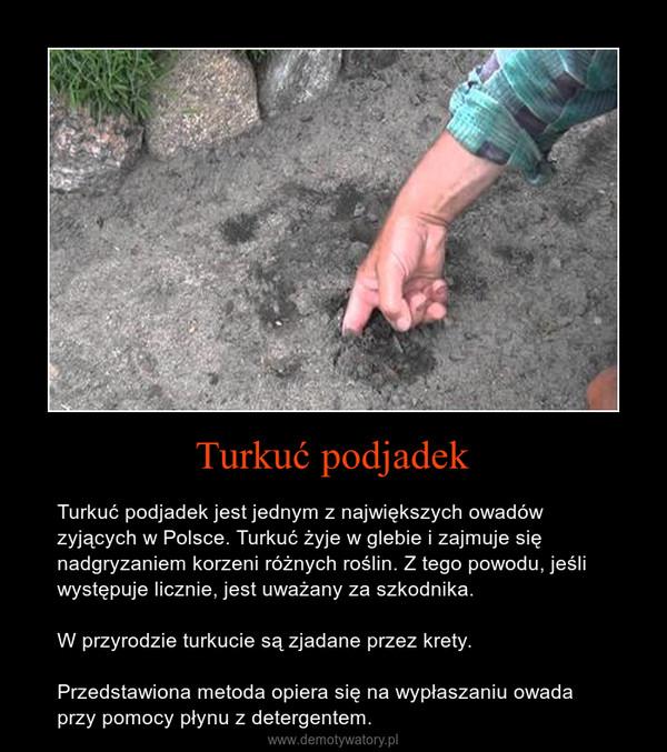 Turkuć podjadek – Turkuć podjadek jest jednym z największych owadów zyjących w Polsce. Turkuć żyje w glebie i zajmuje się nadgryzaniem korzeni różnych roślin. Z tego powodu, jeśli występuje licznie, jest uważany za szkodnika.W przyrodzie turkucie są zjadane przez krety.Przedstawiona metoda opiera się na wypłaszaniu owada przy pomocy płynu z detergentem.