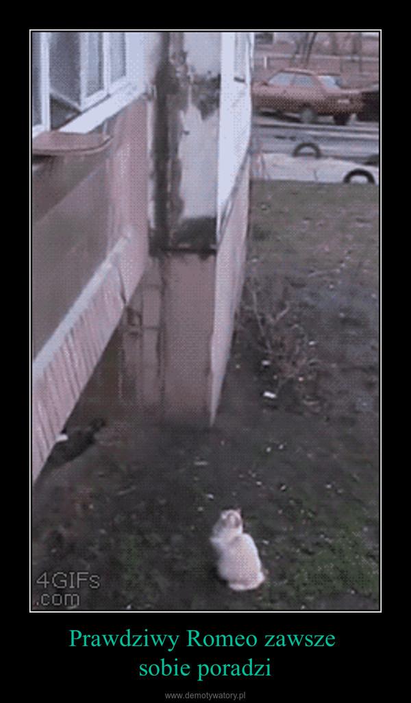Prawdziwy Romeo zawsze sobie poradzi –