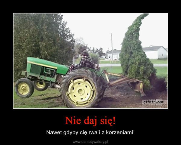 Nie daj się! – Nawet gdyby cię rwali z korzeniami!