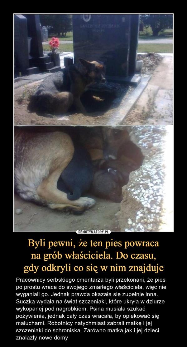 Byli pewni, że ten pies powracana grób właściciela. Do czasu,gdy odkryli co się w nim znajduje – Pracownicy serbskiego cmentarza byli przekonani, że pies po prostu wraca do swojego zmarłego właściciela, więc nie wyganiali go. Jednak prawda okazała się zupełnie inna. Suczka wydała na świat szczeniaki, które ukryła w dziurze wykopanej pod nagrobkiem. Psina musiała szukać pożywienia, jednak cały czas wracała, by opiekować się maluchami. Robotnicy natychmiast zabrali matkę i jej szczeniaki do schroniska. Zarówno matka jak i jej dzieci znalazły nowe domy