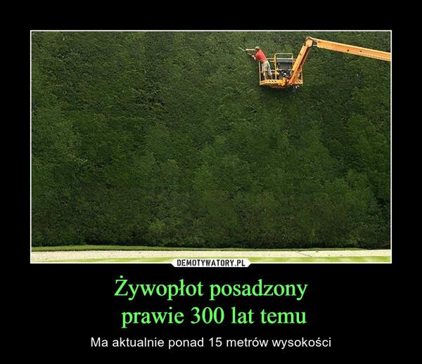 Żywopłot posadzony prawie 300 lat temu – Ma aktualnie ponad 15 metrów wysokości