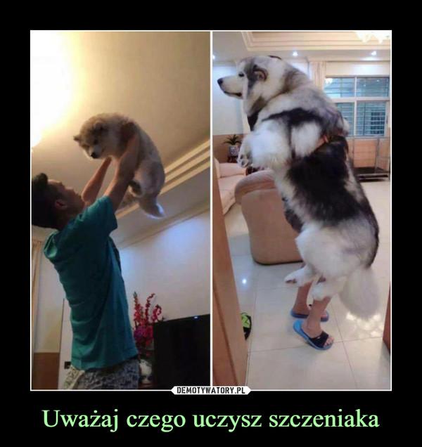 Uważaj czego uczysz szczeniaka –