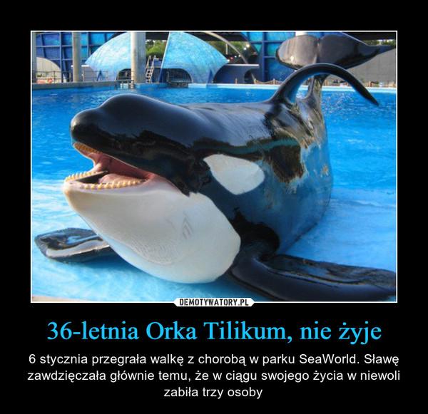 36-letnia Orka Tilikum, nie żyje – 6 stycznia przegrała walkę z chorobą w parku SeaWorld. Sławę zawdzięczała głównie temu, że w ciągu swojego życia w niewoli zabiła trzy osoby
