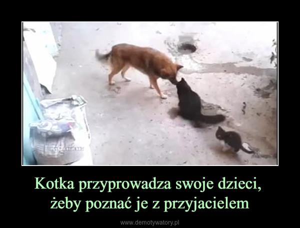Kotka przyprowadza swoje dzieci, żeby poznać je z przyjacielem –