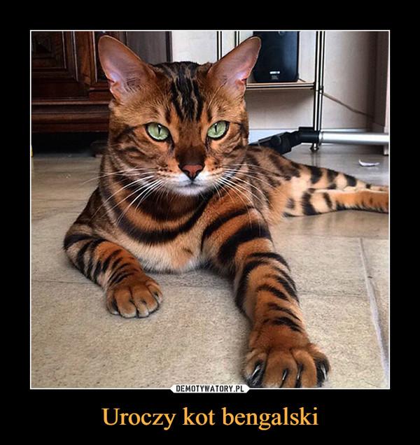 Uroczy kot bengalski –