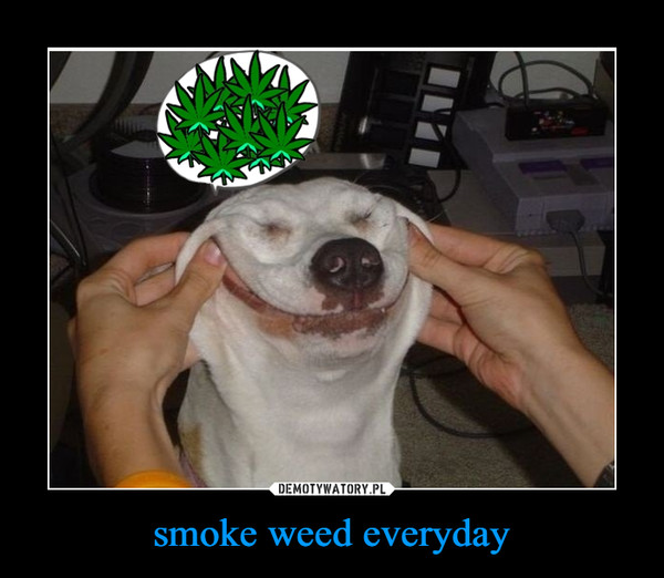 smoke weed everyday –