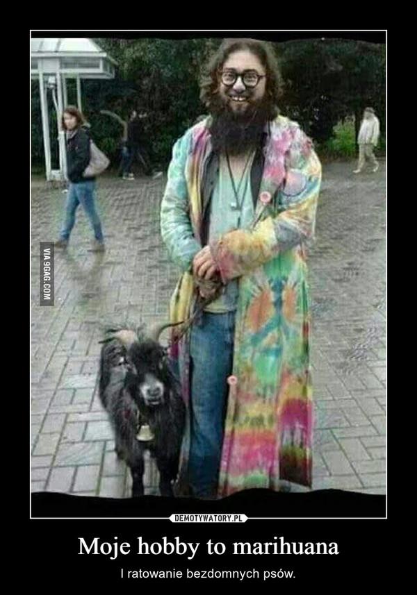 Moje hobby to marihuana – I ratowanie bezdomnych psów.