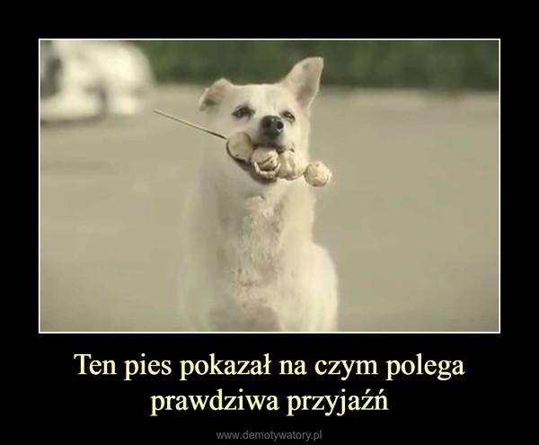 Ten pies pokazał na czym polega prawdziwa przyjaźń –