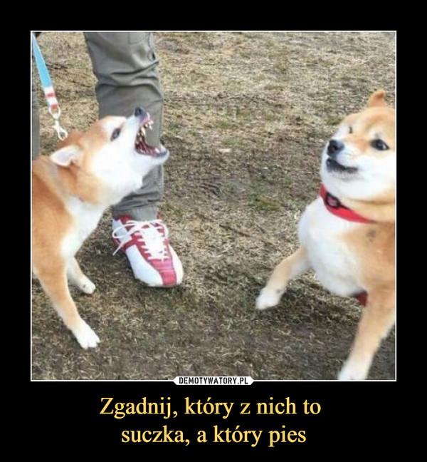 Zgadnij, który z nich to suczka, a który pies –