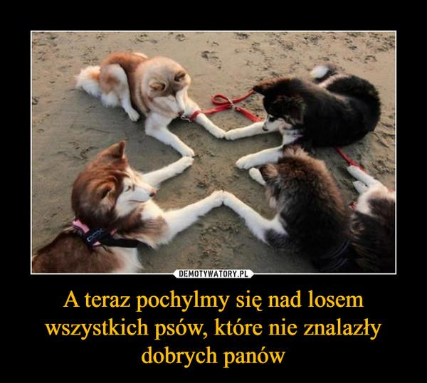 A teraz pochylmy się nad losem wszystkich psów, które nie znalazły dobrych panów –