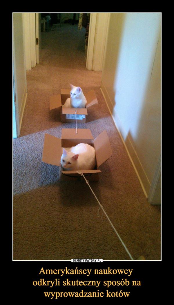 Amerykańscy naukowcy odkryli skuteczny sposób na wyprowadzanie kotów –