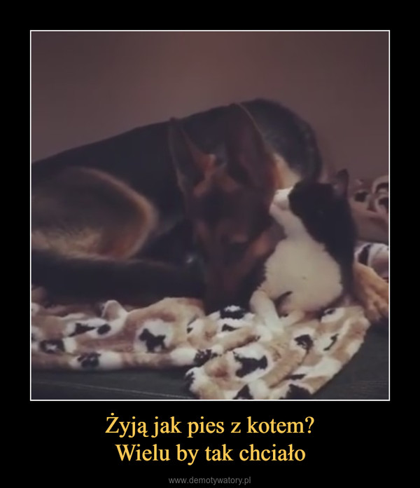 Żyją jak pies z kotem?Wielu by tak chciało –