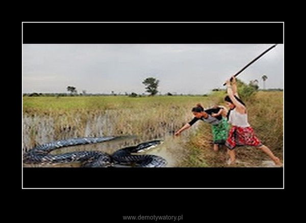 Two Incredible Girl Catch Vicious​ Cobra Snake Using Bamboo Trap How To Catch Water Snake – Two Incredible Girl Catch Vicious​ Cobra Snake Using Bamboo Trap How To Catch Water Snake