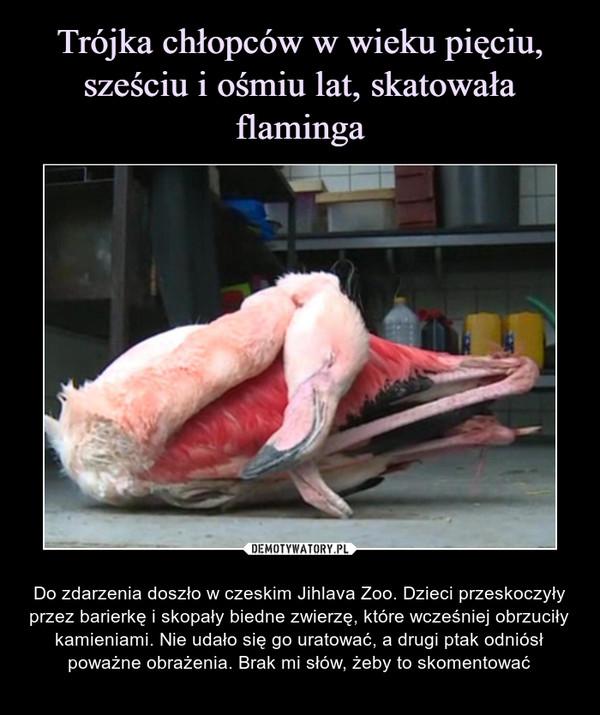 – Do zdarzenia doszło w czeskim Jihlava Zoo. Dzieci przeskoczyły przez barierkę i skopały biedne zwierzę, które wcześniej obrzuciły kamieniami. Nie udało się go uratować, a drugi ptak odniósł poważne obrażenia. Brak mi słów, żeby to skomentować