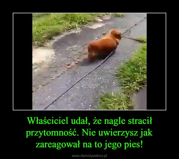 Właściciel udał, że nagle stracił przytomność. Nie uwierzysz jak zareagował na to jego pies! –