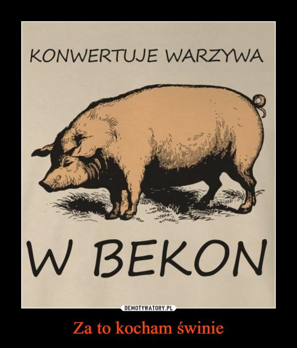 Za to kocham świnie –  KONWERTUJE WARZYWA W BEKON
