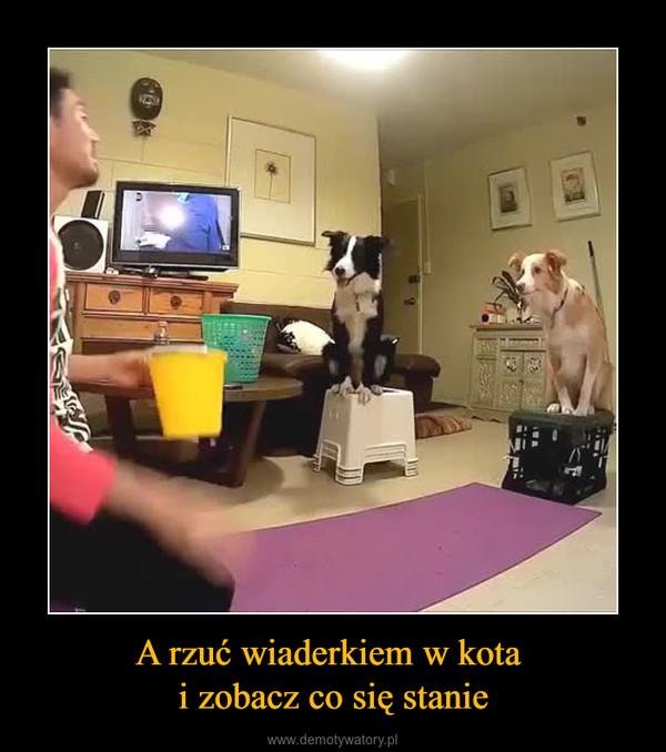 A rzuć wiaderkiem w kota i zobacz co się stanie –