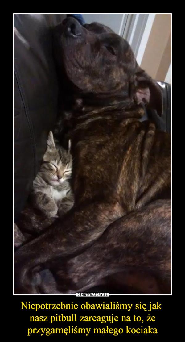 Niepotrzebnie obawialiśmy się jak nasz pitbull zareaguje na to, że przygarnęliśmy małego kociaka –