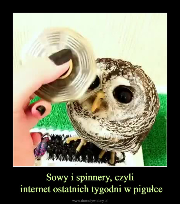 Sowy i spinnery, czyli internet ostatnich tygodni w pigułce –