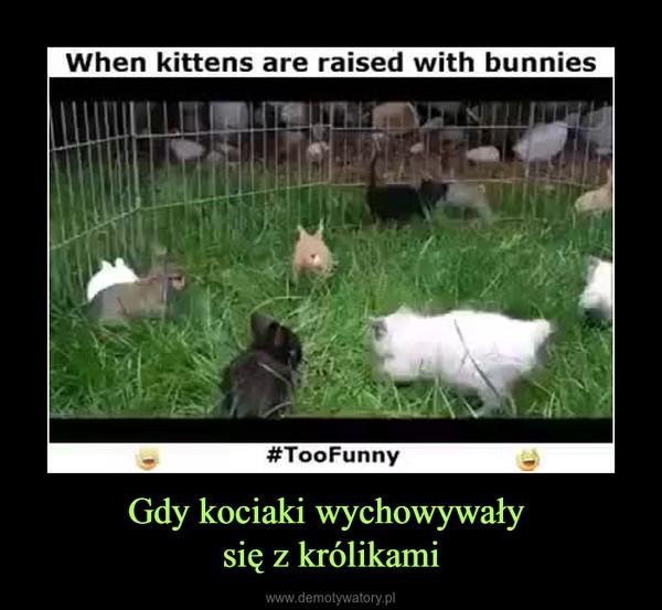 Gdy kociaki wychowywały się z królikami –