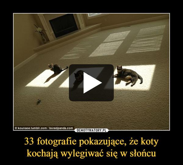 33 fotografie pokazujące, że koty kochają wylegiwać się w słońcu –