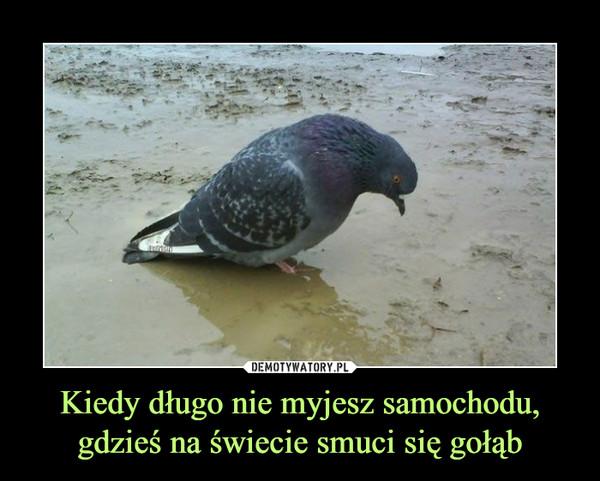 Kiedy długo nie myjesz samochodu,gdzieś na świecie smuci się gołąb –