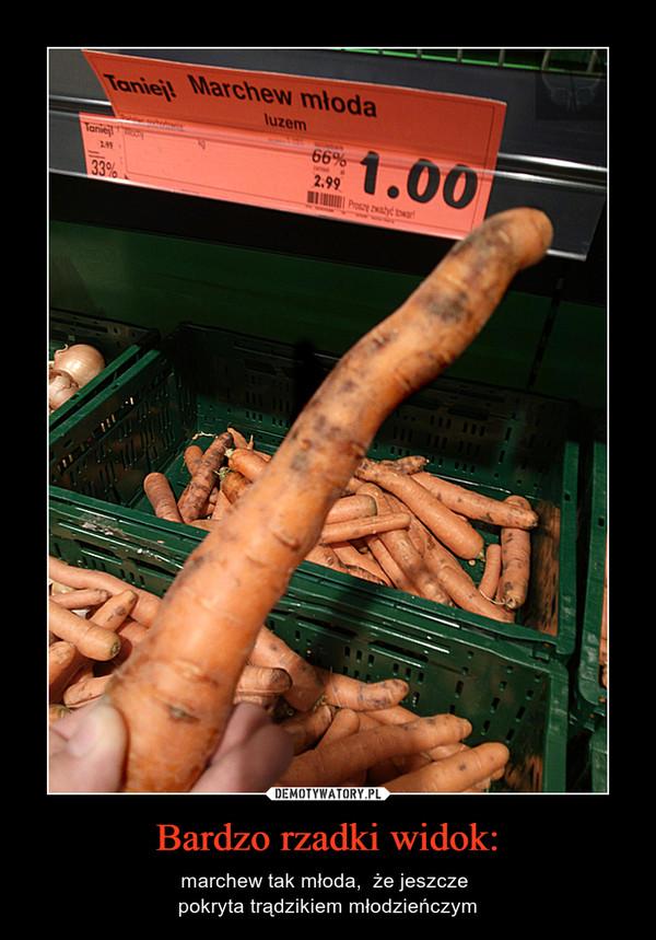 Bardzo rzadki widok: – marchew tak młoda,  że jeszcze pokryta trądzikiem młodzieńczym