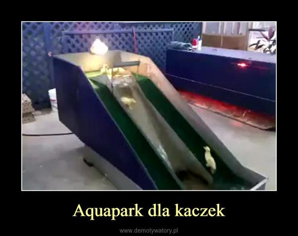 Aquapark dla kaczek –