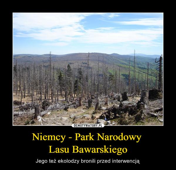 Niemcy - Park Narodowy Lasu Bawarskiego – Jego też ekolodzy bronili przed interwencją