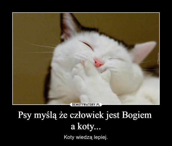 Psy myślą że człowiek jest Bogiem a koty... – Koty wiedzą lepiej.