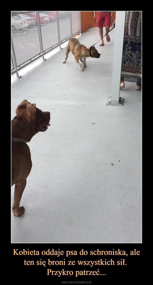 Kobieta oddaje psa do schroniska, ale ten się broni ze wszystkich sił. Przykro patrzeć... –