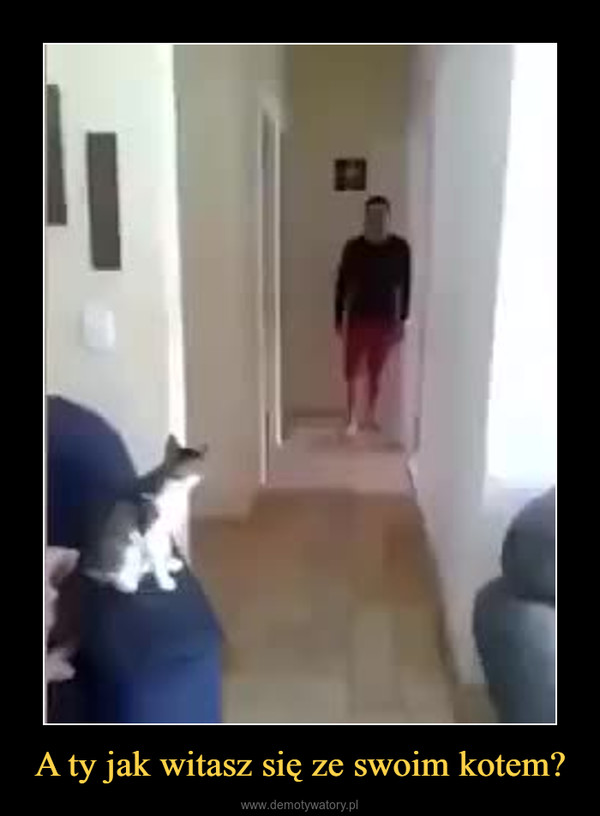 A ty jak witasz się ze swoim kotem? –