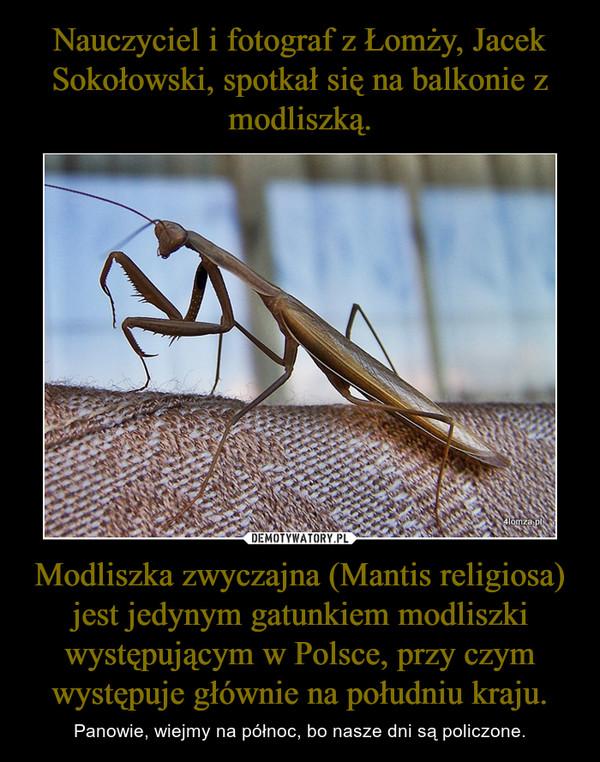 Modliszka zwyczajna (Mantis religiosa) jest jedynym gatunkiem modliszki występującym w Polsce, przy czym występuje głównie na południu kraju. – Panowie, wiejmy na północ, bo nasze dni są policzone.