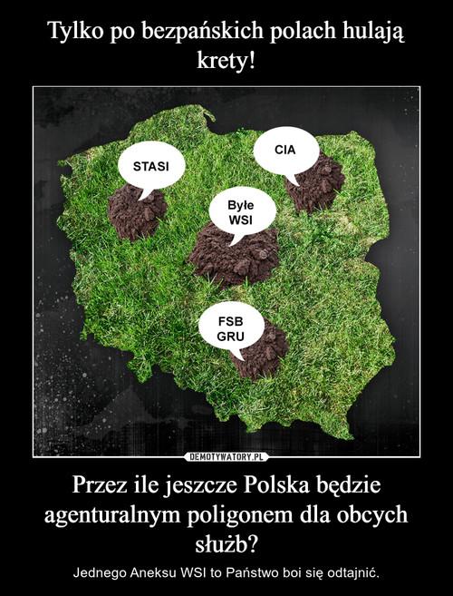 Tylko po bezpańskich polach hulają krety! Przez ile jeszcze Polska będzie agenturalnym poligonem dla obcych służb?