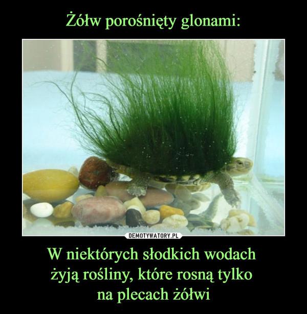 W niektórych słodkich wodach żyją rośliny, które rosną tylko na plecach żółwi –