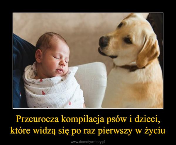 Przeurocza kompilacja psów i dzieci, które widzą się po raz pierwszy w życiu –
