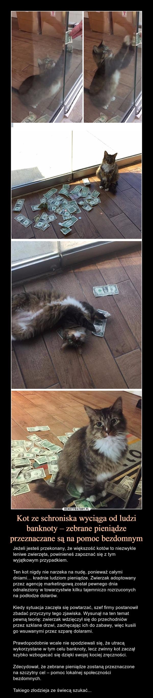 Kot ze schroniska wyciąga od ludzi banknoty – zebrane pieniądze przeznaczane są na pomoc bezdomnym – Jeżeli jesteś przekonany, że większość kotów to niezwykle leniwe zwierzęta, powinieneś zapoznać się z tym wyjątkowym przypadkiem.Ten kot nigdy nie narzeka na nudę, ponieważ całymi dniami… kradnie ludziom pieniądze. Zwierzak adoptowany przez agencję marketingową został pewnego dnia odnaleziony w towarzystwie kilku tajemniczo rozrzuconych na podłodze dolarów.Kiedy sytuacja zaczęła się powtarzać, szef firmy postanowił zbadać przyczyny tego zjawiska. Wysunął na ten temat pewną teorię: zwierzak wdzięczył się do przechodniów przez szklane drzwi, zachęcając ich do zabawy, więc kusili go wsuwanymi przez szparę dolarami.Prawdopodobnie wcale nie spodziewali się, że utracą wykorzystane w tym celu banknoty, lecz zwinny kot zaczął szybko wzbogacać się dzięki swojej kociej zręczności.Zdecydował, że zebrane pieniądze zostaną przeznaczone na szczytny cel – pomoc lokalnej społeczności bezdomnych.Takiego złodzieja ze świecą szukać...