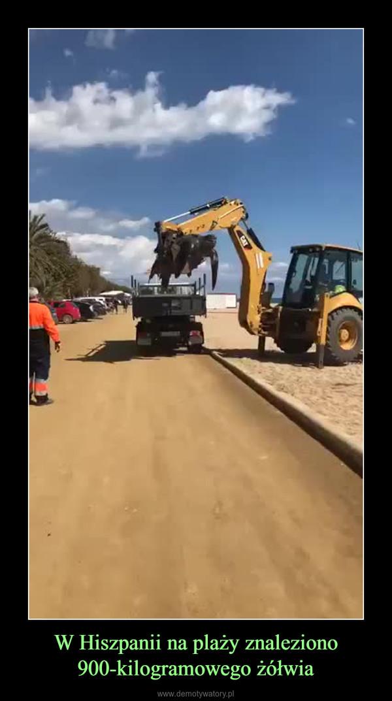 W Hiszpanii na plaży znaleziono 900-kilogramowego żółwia –