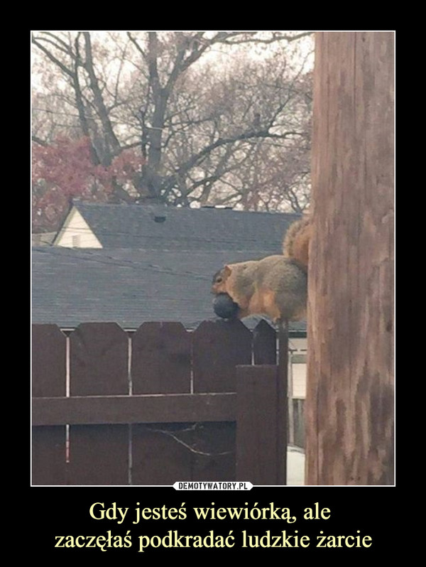 Gdy jesteś wiewiórką, ale zaczęłaś podkradać ludzkie żarcie –