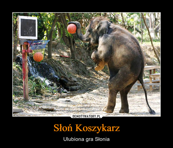 Słoń Koszykarz – Ulubiona gra Słonia