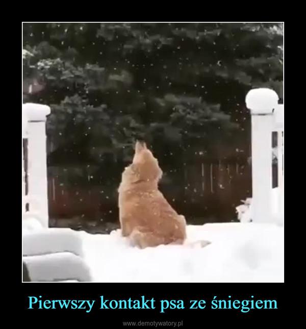 Pierwszy kontakt psa ze śniegiem –