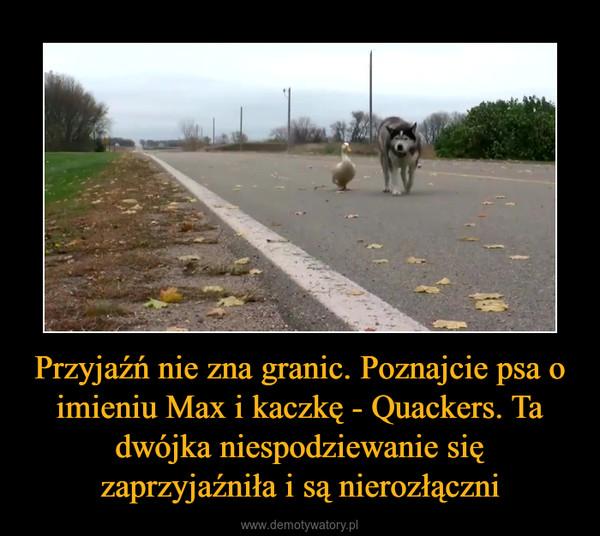 Przyjaźń nie zna granic. Poznajcie psa o imieniu Max i kaczkę - Quackers. Ta dwójka niespodziewanie się zaprzyjaźniła i są nierozłączni –
