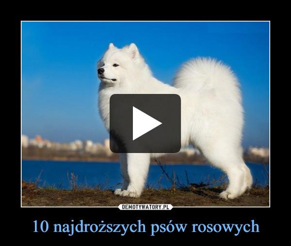 10 najdroższych psów rosowych –