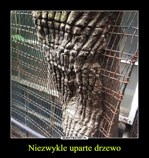 Niezwykle uparte drzewo –
