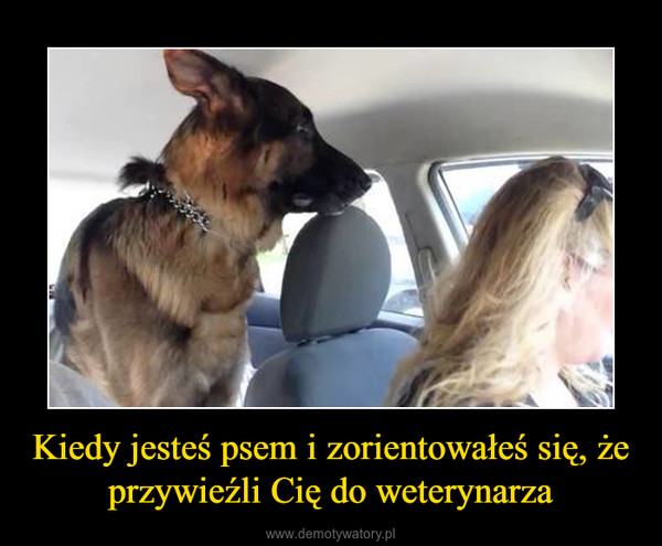 Kiedy jesteś psem i zorientowałeś się, że przywieźli Cię do weterynarza –