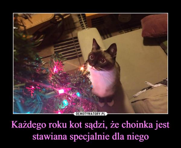 Każdego roku kot sądzi, że choinka jest stawiana specjalnie dla niego –