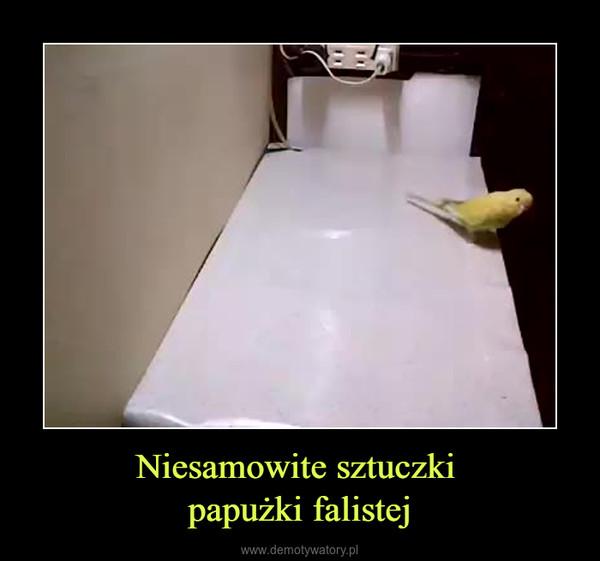 Niesamowite sztuczki papużki falistej –
