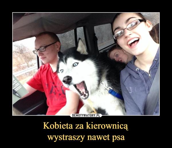 Kobieta za kierownicąwystraszy nawet psa –