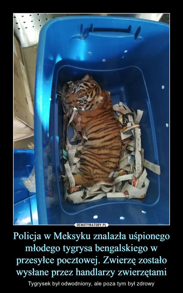 Policja w Meksyku znalazła uśpionego młodego tygrysa bengalskiego w przesyłce pocztowej. Zwierzę zostało wysłane przez handlarzy zwierzętami – Tygrysek był odwodniony, ale poza tym był zdrowy
